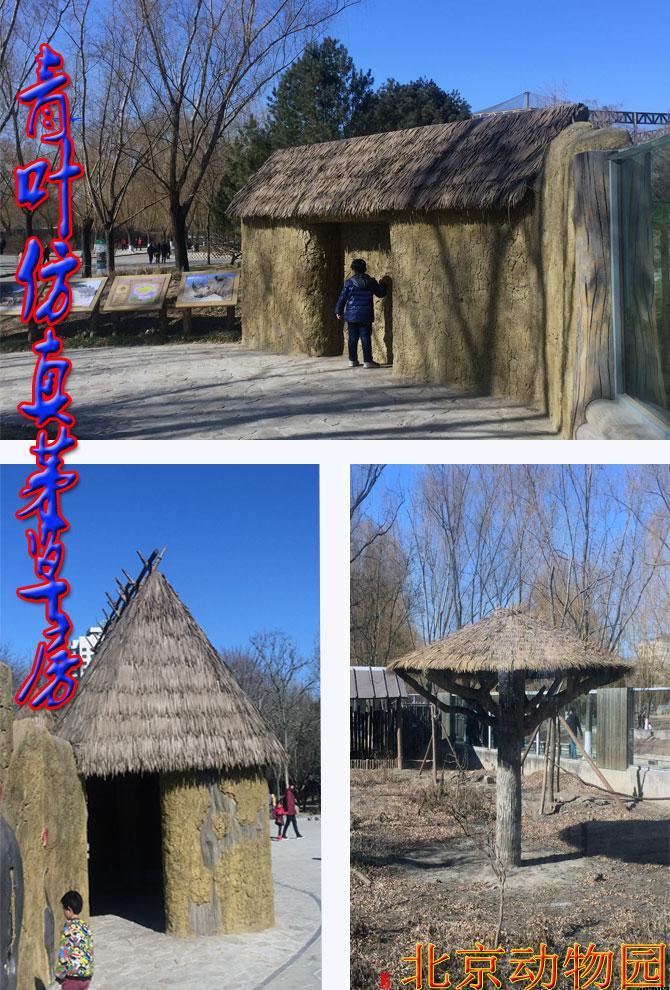 北京动物园茅草棚茅草伞